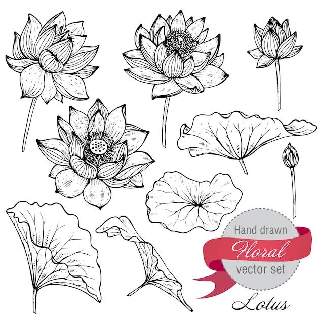手描きの蓮の花と葉のセットです。 Premiumベクター