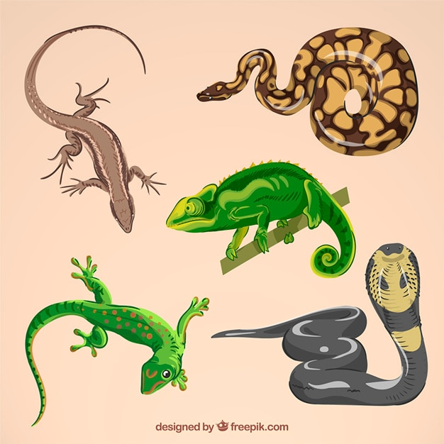 Set of hand drawn reptile