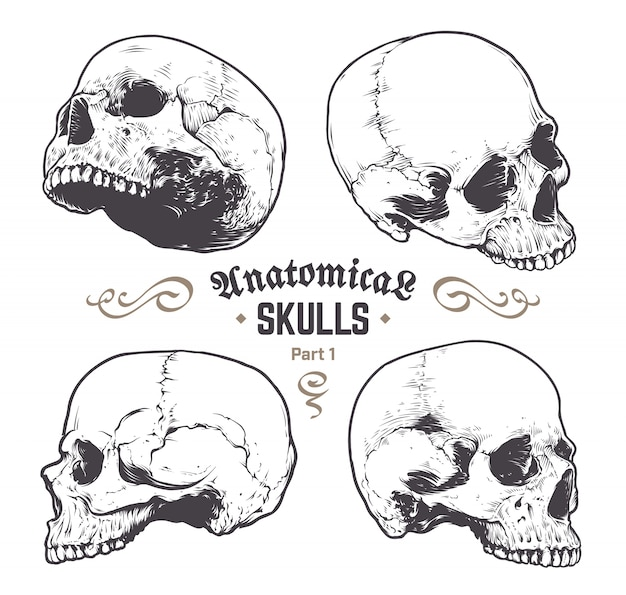 set of hand drawn skulls Free Vector