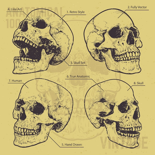 set of hand drawn skulls Free Vector