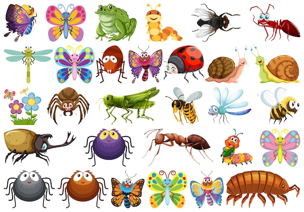 Набор символов насекомых Бесплатные векторы