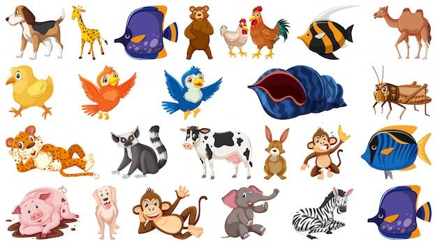 孤立したテーマの野生動物のセット Premiumベクター