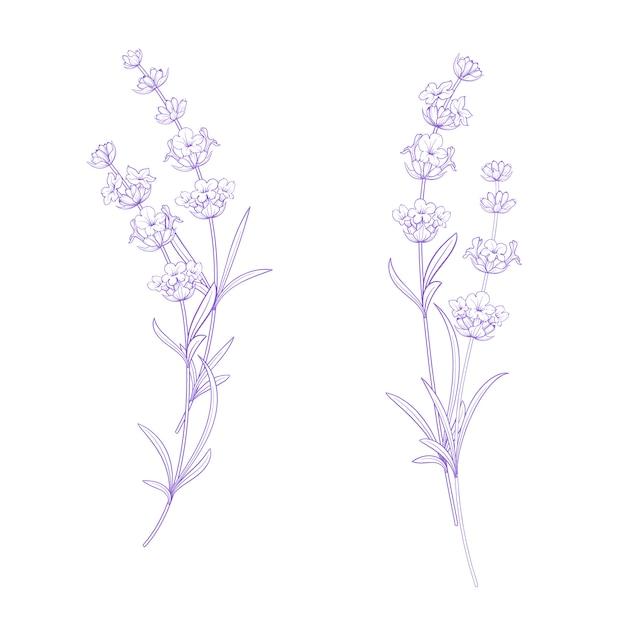 ラベンダーの花のセット。 Premiumベクター