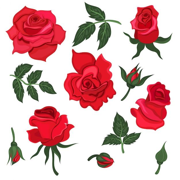 잎과 흰색 배경에 고립 된 빨간 장미 꽃의 집합입니다. 제도법. 프리미엄 벡터