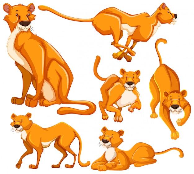 Набор львица мультипликационный персонаж Бесплатные векторы