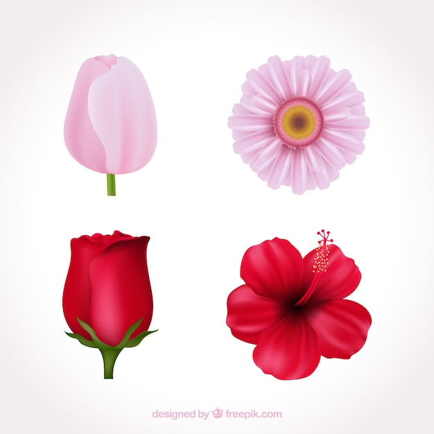 Pink flower vectors free vector graphics everypixel set of pink flowers in realistic style mightylinksfo