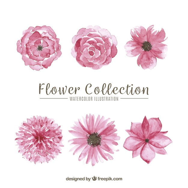 Set of pink flowers Free Vector