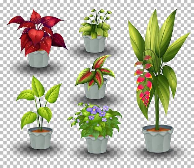 鉢植えの植物のセット 無料ベクター