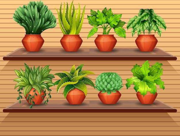 棚の上の植物のセット 無料ベクター