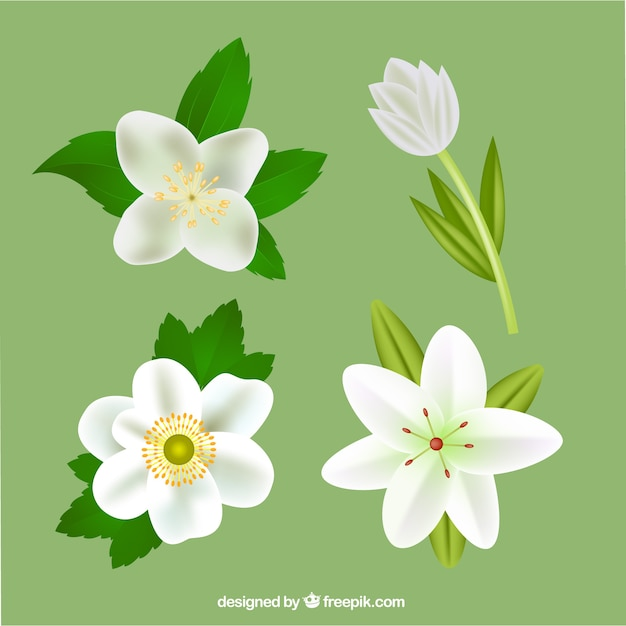 Set of realistic flowers in white color