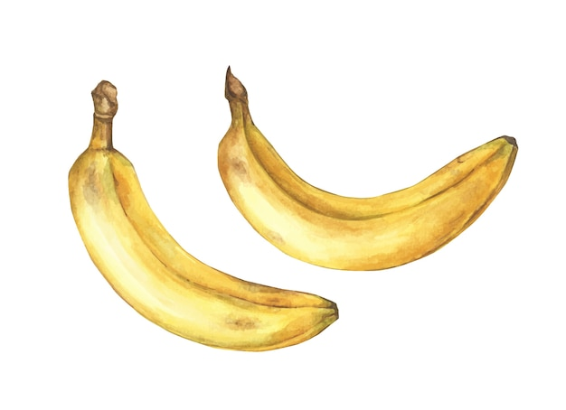バナナ 熟 した 【バナナ】主なメーカーと種類まとめ/高原栽培が美味しい理由など。
