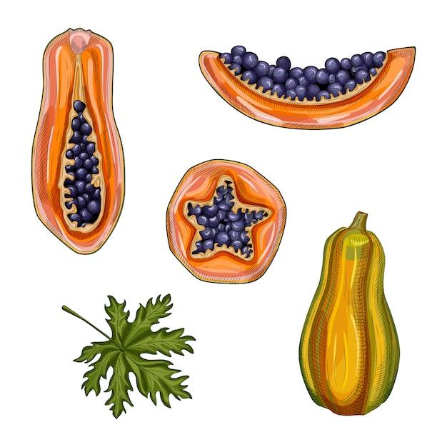 Набор из спелой папайи. нарисованные рукой азимины летние фрукты. целая, половина и ломтик папайи. Premium векторы