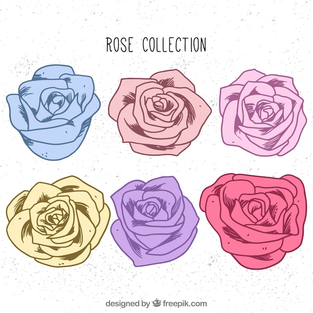 Set of six hand-drawn roses with different colors Vector | Free ...