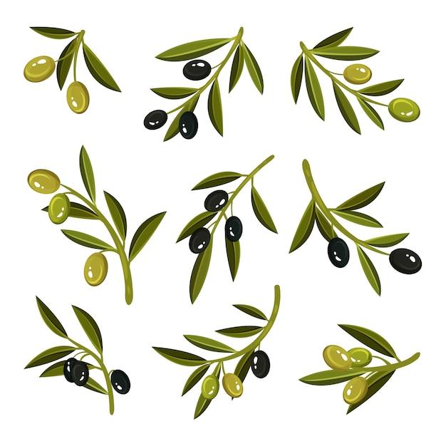 葉、緑と黒のオリーブの小枝のセット。自然で健康的な製品。自然食品 Premiumベクター