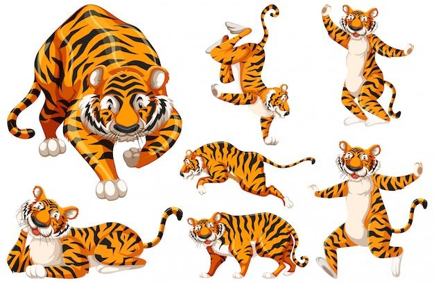 Набор символов тигра Бесплатные векторы