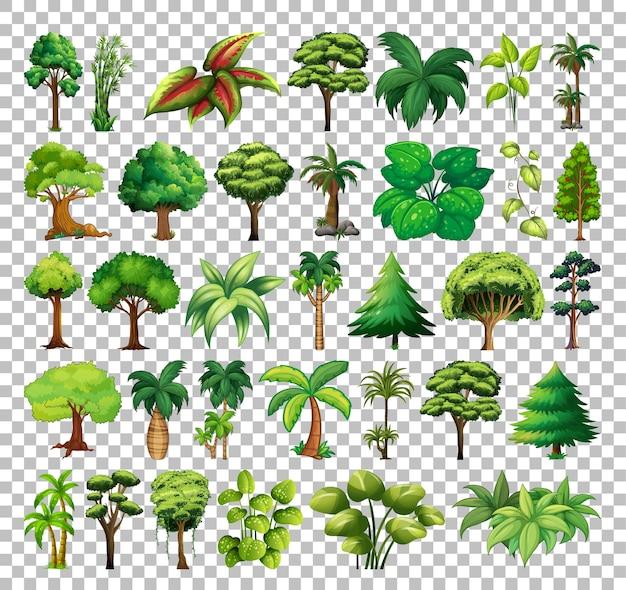 Набор дерева на прозрачном фоне Бесплатные векторы