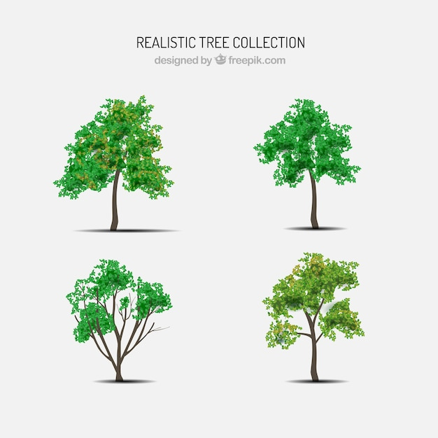 Set of trees in realistic style Free Vector