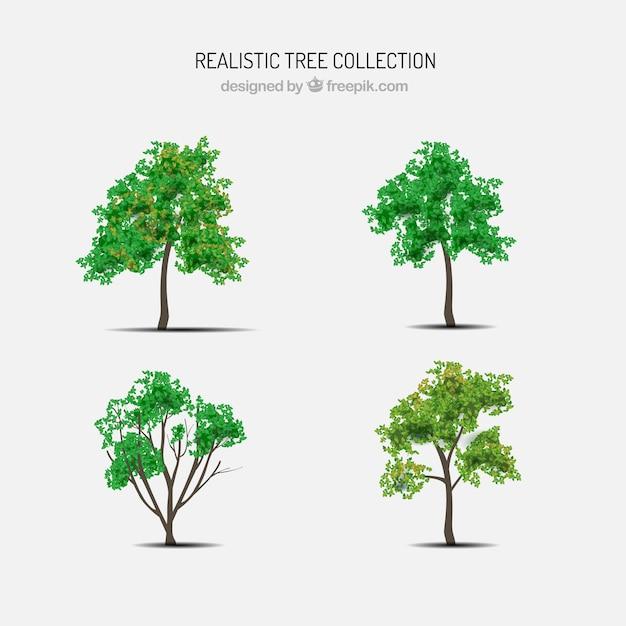 현실적인 스타일의 나무 세트 무료 벡터