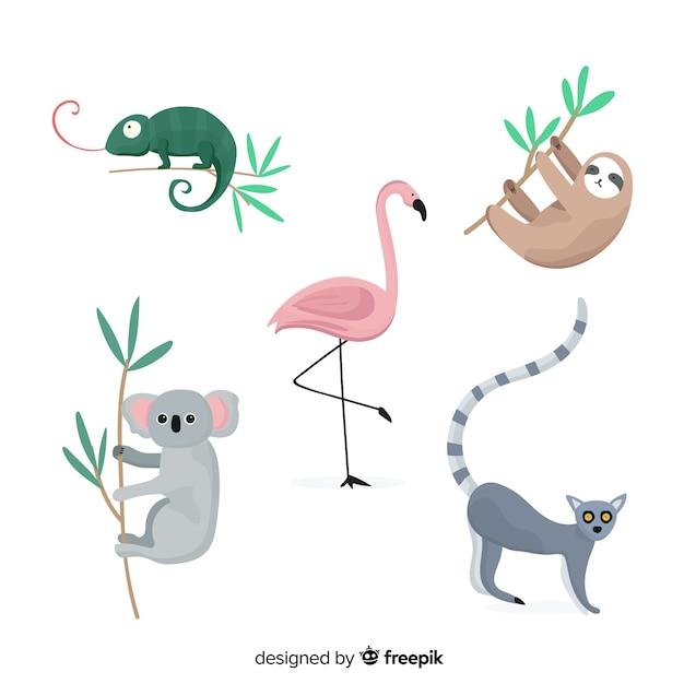 熱帯動物のセット:カメレオン、コアラ、フラミンゴ、ナマケモノ、ワオキツネザル。フラットスタイルデザイン Premiumベクター