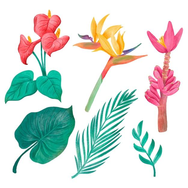 熱帯の葉と花のセット 無料ベクター