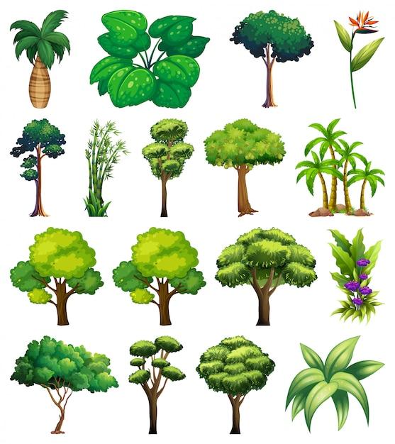 Набор различных растений и деревьев Бесплатные векторы