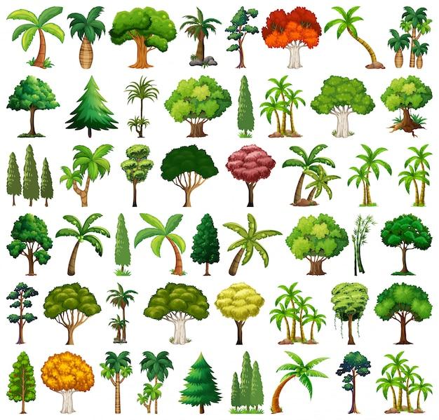 다양 한 식물과 나무 세트 무료 벡터
