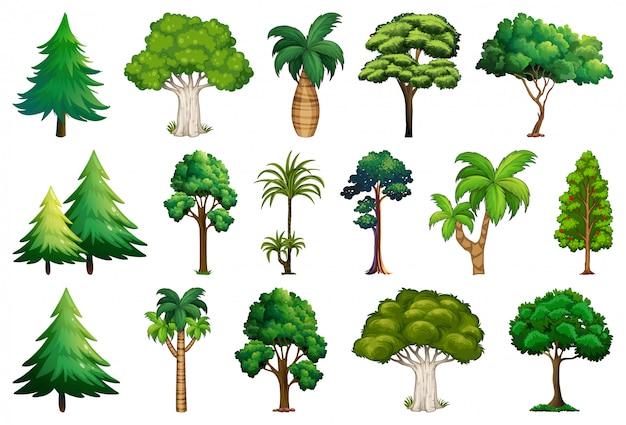 다양한 식물과 나무 세트 무료 벡터