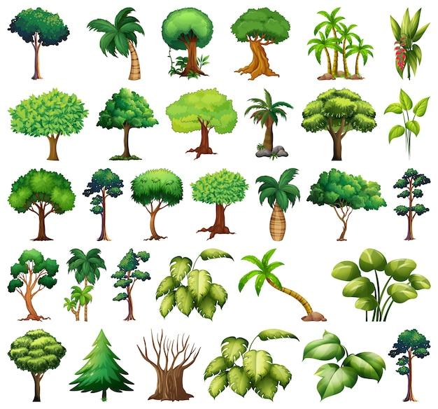 さまざまな植物や木のセット 無料ベクター