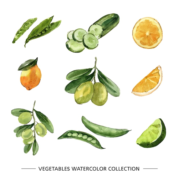 さまざまな孤立した野菜の水彩画のセット 無料ベクター