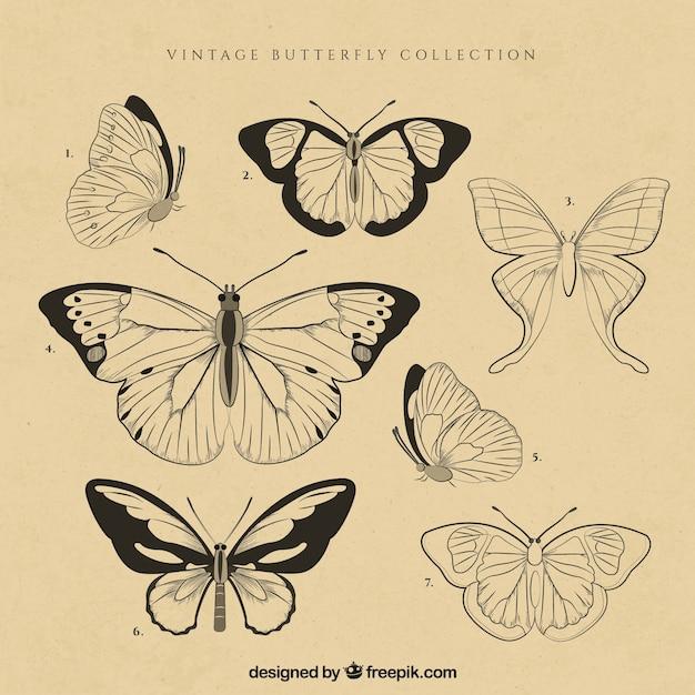 Набор старинных бабочек Premium векторы