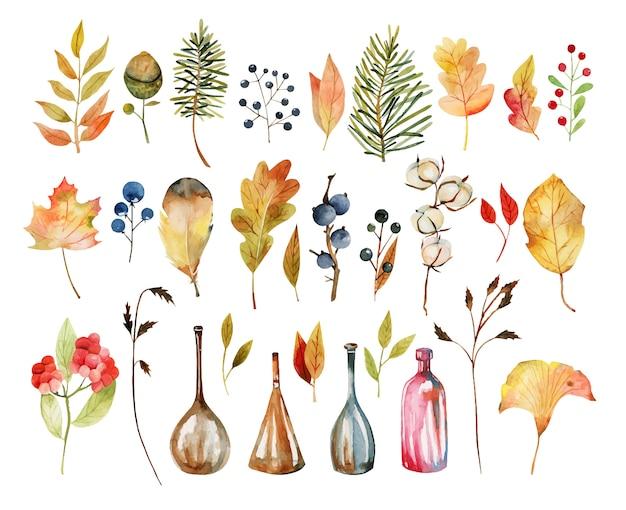 Набор акварельных осенних листьев растений, цветов хлопка, желтых листьев деревьев, осенних ягод, дубовых листьев и желудей, бутылок Premium векторы