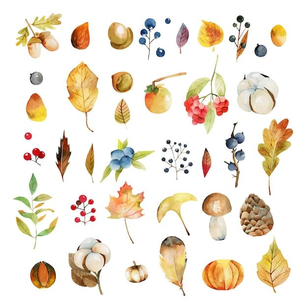 수채화 가을 식물 잎, 목화 꽃, 노란 나무 잎, 가을 열매, 참나무 잎과 도토리, 전나무 콘과 버섯 세트 프리미엄 벡터