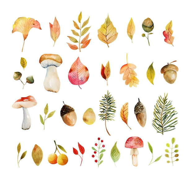 Набор акварельных осенних растений желтые листья деревьев, дубовые листья, желуди и грибы ручная роспись изолированных иллюстраций на белом фоне Premium векторы