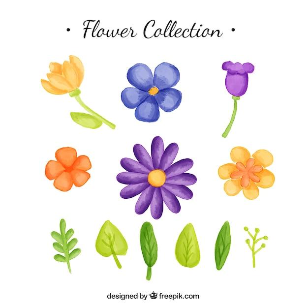 مجموعه ای از آبرنگ گل و برگ