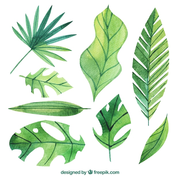 Download Vector Set Of Watercolor Palm Leaves Vectorpicker Download 4,096 tropical leaves free vectors. set of watercolor palm leaves
