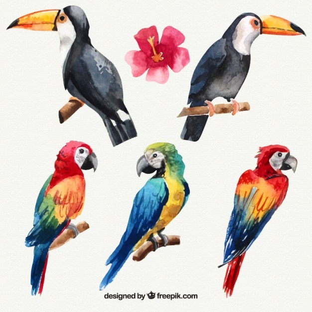 Set of watercolor tropical birds