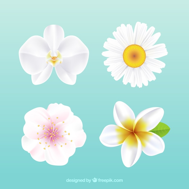 White flowers vectors free vector graphics everypixel set of white flowers in realistic style mightylinksfo