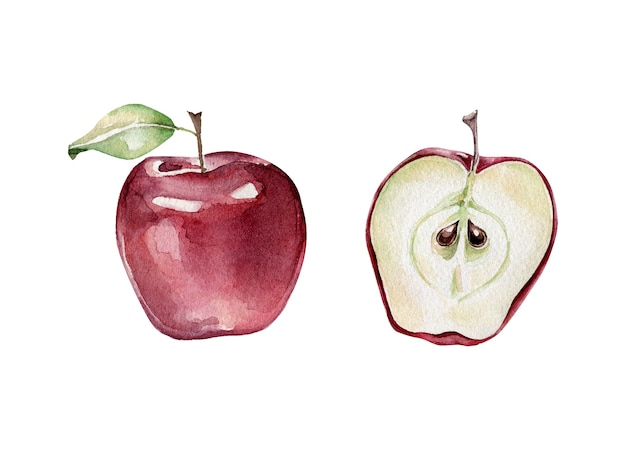 Набор целых и нарезанных яблок Premium векторы