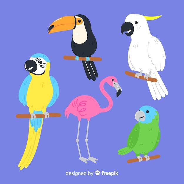 野鳥のセット:オオハシ、オウム、フラミンゴ 無料ベクター