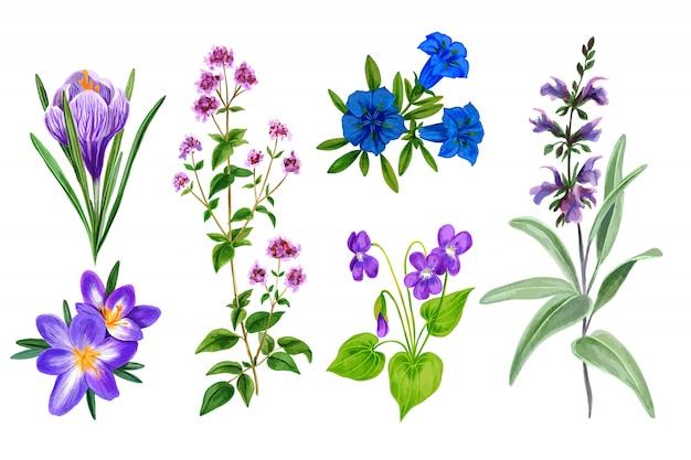 Набор диких полевых цветов и трав, акварель Premium векторы