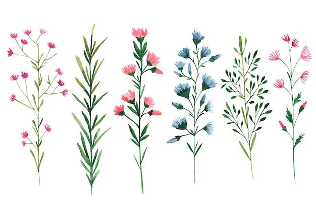 白い背景の上の野生の花の水彩イラストのセット Premiumベクター