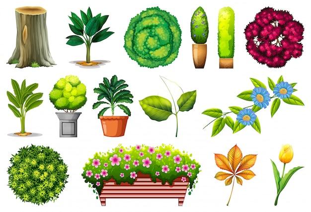 Set of ornamental plants Free Vector
