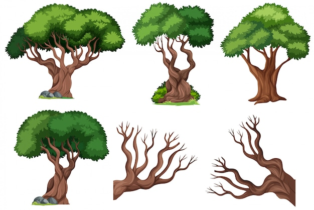 Set of ornamental  tree Free Vector
