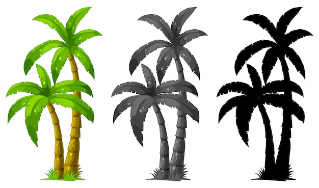 Set of palm tree Free Vector