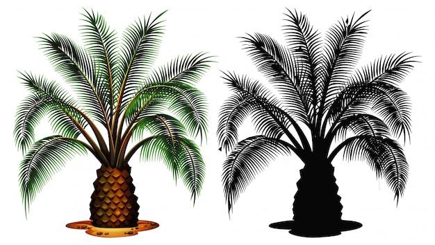 Set of palm tree Free Vector