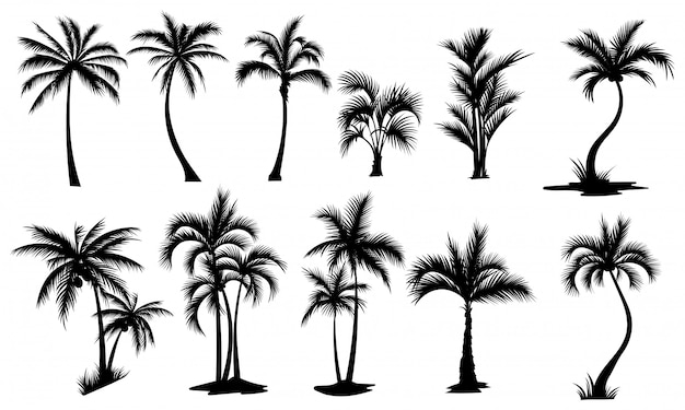 Set of palm trees. collection of silhouette of palm tree. the contours of tropical plants. Premium Vector