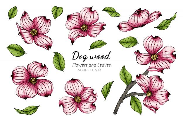 Set of pink dogwood flower and leaf drawing illustration Premium Vector