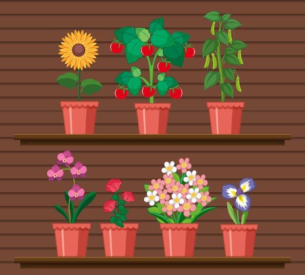 Set di piante sugli scaffali Vettore gratuito