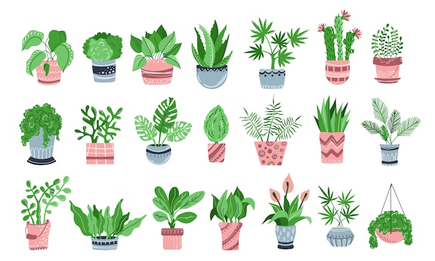 Set of potted plants, flowers, home garden, flat Premium Vector