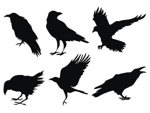 Set of ravens. a collection of black crows. silhouette of a flying crow. Premium Vector
